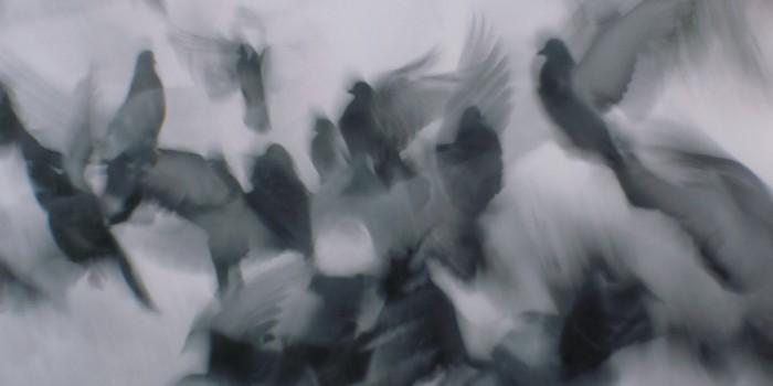 Pigeons as impressionist artists {favorites}
