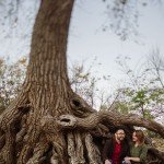 st paul engagement photos under knotted tree roots