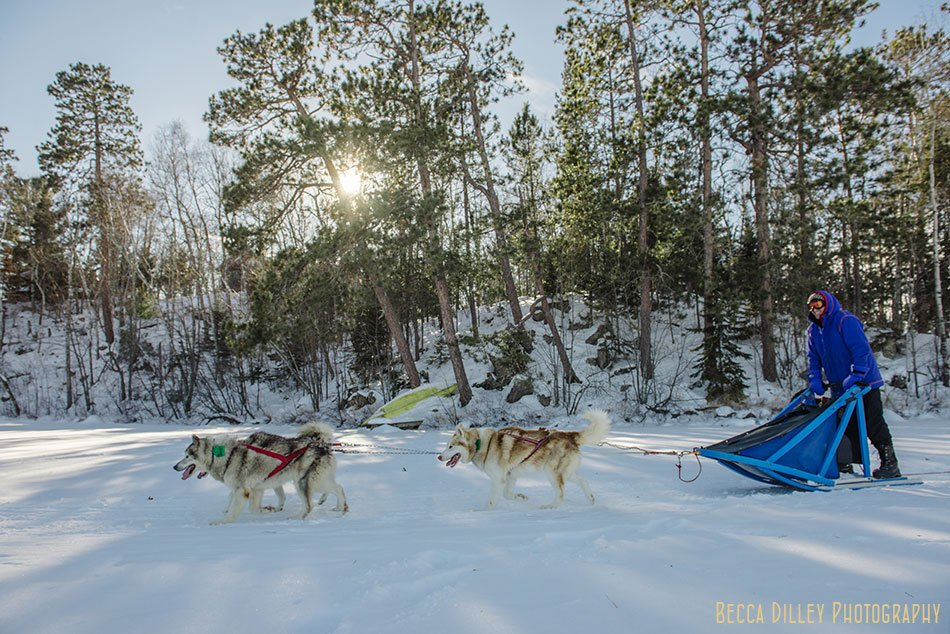 ely winter boundary waters wintergreen dog sledding