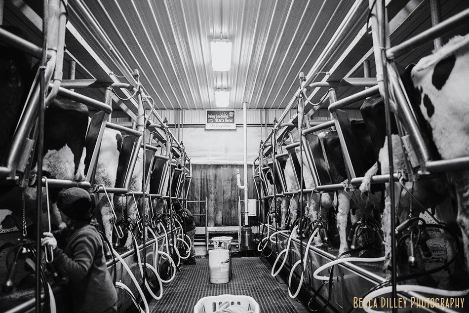 minnsota farm photographer milking parlor