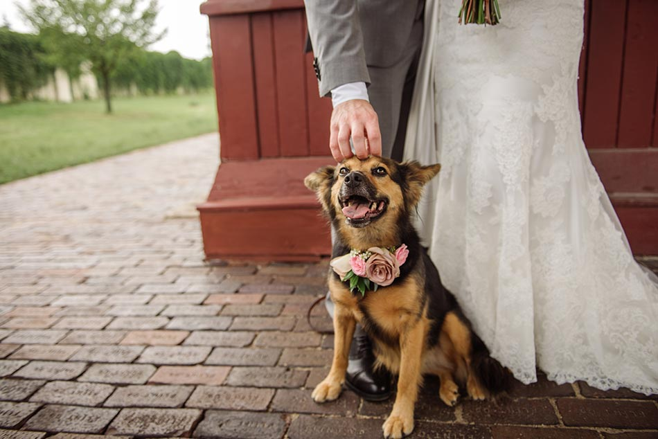 wa-frost-wedding-photographer-st-paul-mn-009